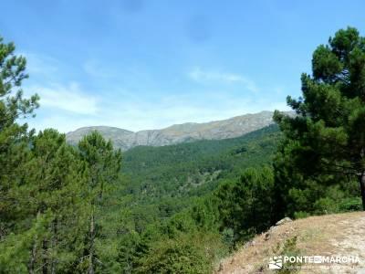 Pinares de la Angostura en Piedralaves;rutas senderismo cercedilla ruta sierra madrid